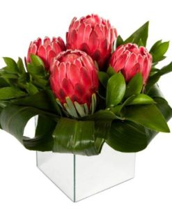 Red Protea Medium