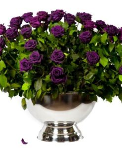 Purple preserved roses arranged in a champagne cooler
