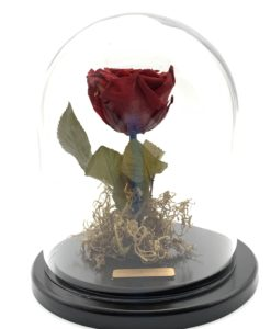 enchanted eternal rose