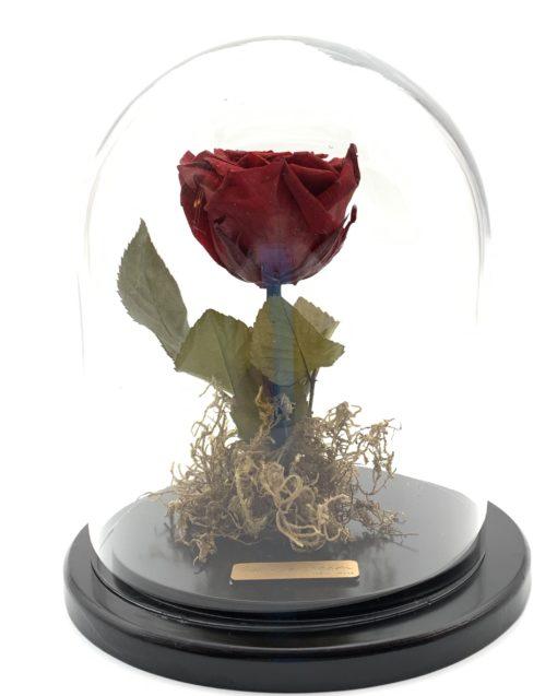 enchanted eternal rose