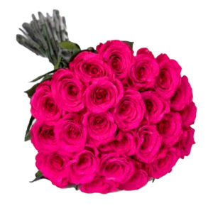 long lasting roses electric pink