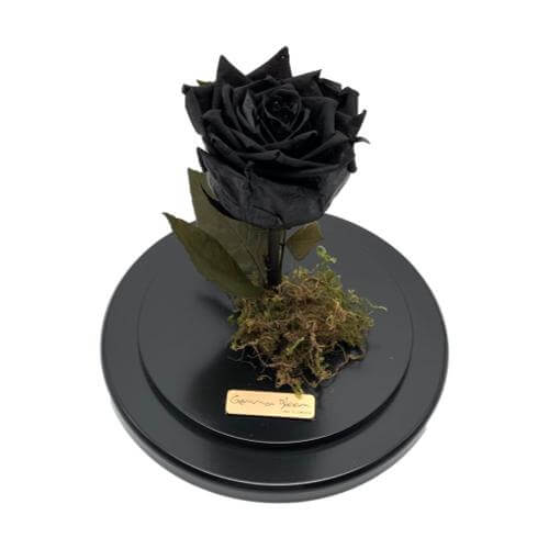 Black forever rose enchanted